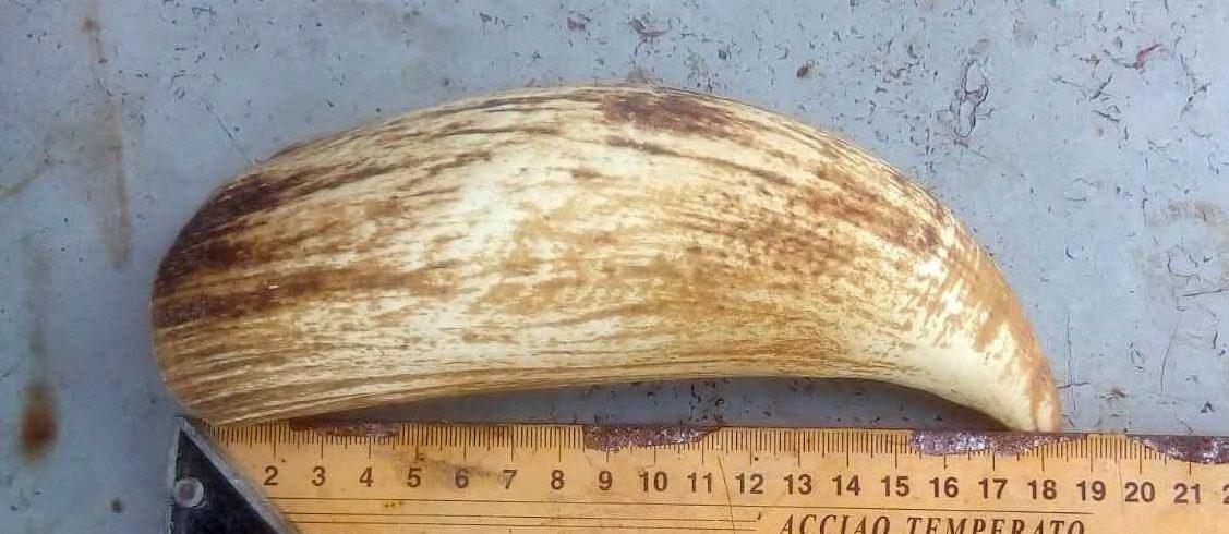 длинна зуба